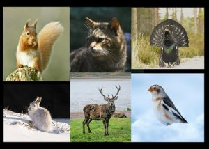 wildlife in cairngorms resort scotland